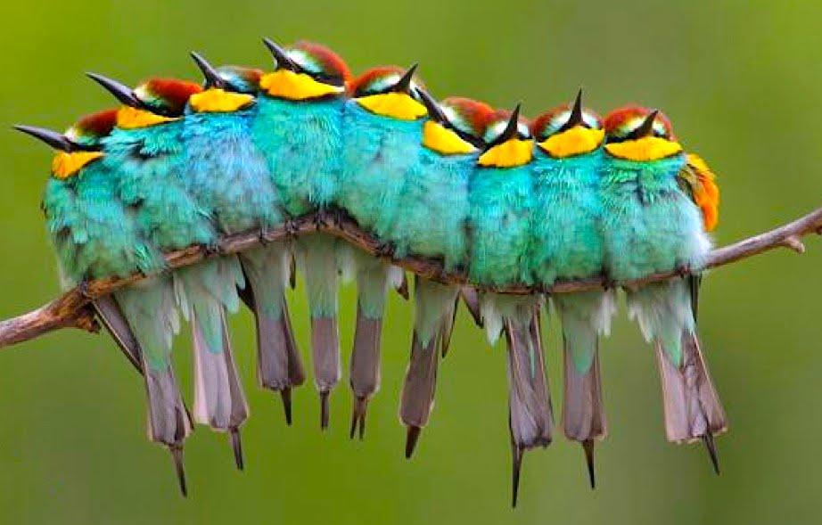 Des oiseaux rares