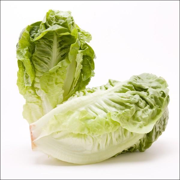 Comment s'appelle cette excellente salade grasse et croquante que l'on retrouve sur les étals au début du printemps ?