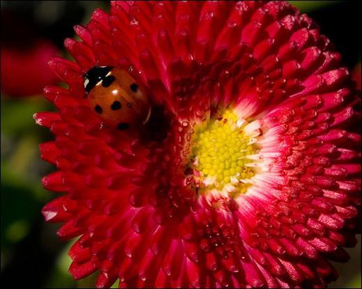 Qui profite de la couleur de la fleur pour se cacher ?
