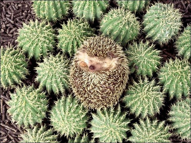 Qui est ce cactus bizarre ?