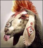 Un phénomène ou une rareté est appelé  mouton à --- pattes .