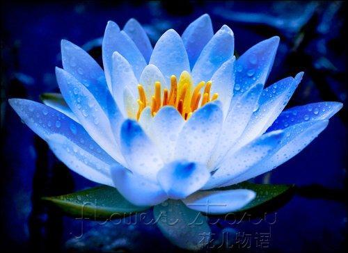 Quel est le nom du héros de la bande dessinée intitulée  Le lotus bleu  ?