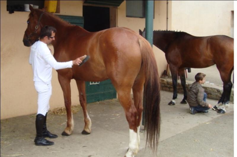 Quizz galop 3 quiz chevaux equitation galop 3 - Purger les radiateurs dans quel ordre ...