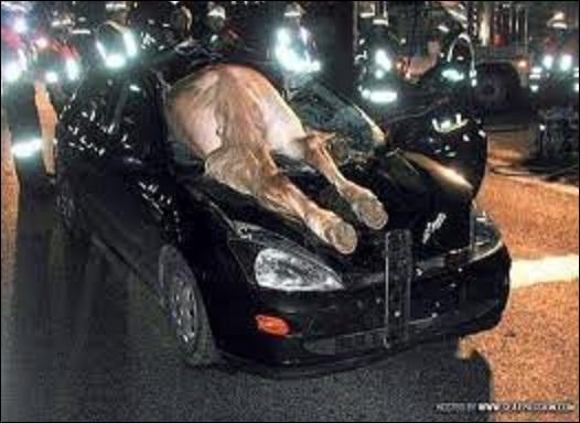 En Pennsylvanie, que doit faire ou ne pas faire un automobiliste s'il rencontre des chevaux ?