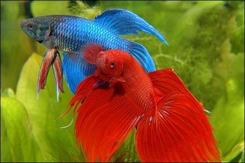 quizz les poissons d 39 aquarium quiz photos poissons aquariophilie. Black Bedroom Furniture Sets. Home Design Ideas