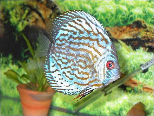 Quizz les poissons d 39 aquarium quiz photos poissons for Aquarium a poisson