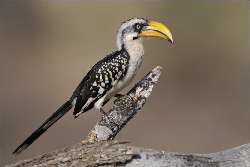 Quizz les z 39 animaux quiz animaux for Oiseau noir bec jaune