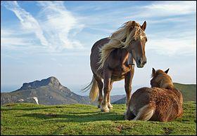 Cette jolie race de poneys vit dans les Pyrénées.