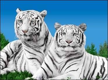 Lorraine, parc zoologique, centre thermal et touristique (Thermapolis et Villa Pompéi) !