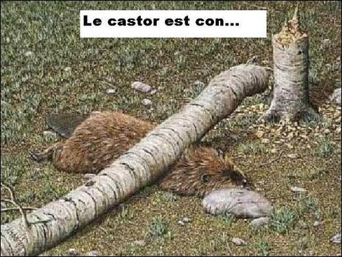 Affluent de la Seine portant l'ancien nom du castor !