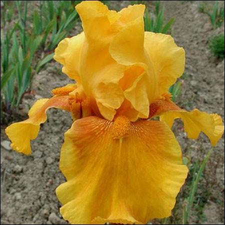 Connaissez-vous le nom de cette fleur, aux nuances subtiles ?