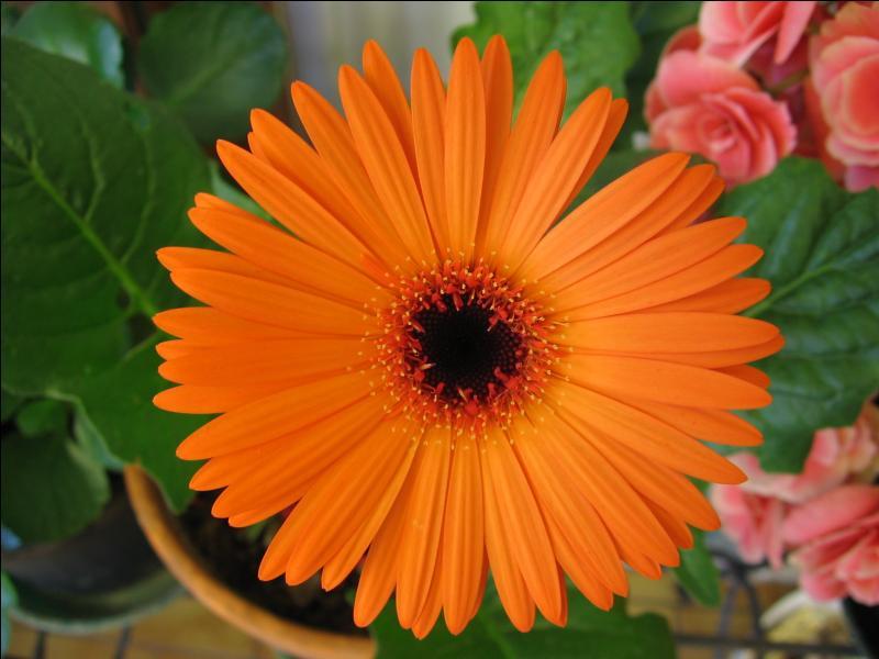 Quel est le nom de cette fleur, dont le nom ne doit pas pour autant