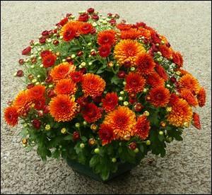 Quel est le nom de cette fleur, qu'il vaut mieux éviter d'offrir aux personnes susceptibles ?
