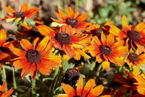Des fleurs orange