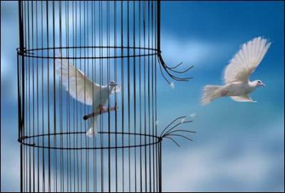 En 1971, quel artiste a chanté 'les enfants, si vous voyez des p'tits oiseaux prisonniers, ouvrez-leur la porte vers la liberté' ? (Clip)