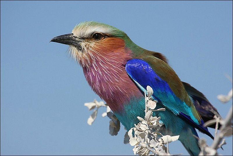 Qui a eu Nathalie pour guide et a chanté 'mon Dieu, qu'il était drôle à voir le p'tit oiseau de toutes les couleurs' en 1966 ? (Clip)
