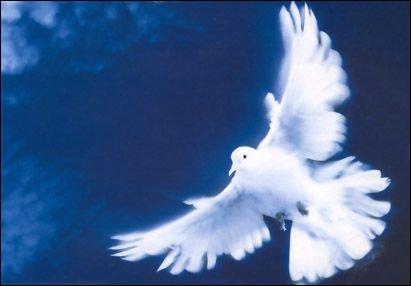 'La Fille aux yeux d'or' a chanté 'regarde l'oiseau, comme un point sur un ciel. Il s'amuse, il fait le beau, tient le soleil sur ses ailes  en 1983. Qui est-ce ? (Clip)