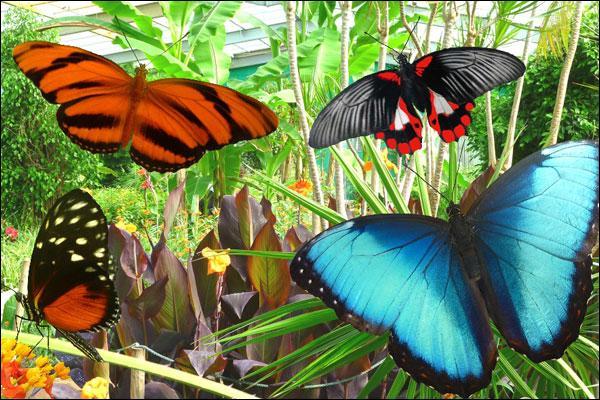 Quel compositeur classique a écrit une jolie pièce pour piano intitulée 'Papillons  ?