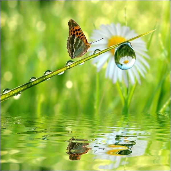 Naître avec le printemps, mourir avec les roses, Sur l'aile du zéphyr nager dans un ciel pur, Balancé sur le sein des fleurs à peine écloses, S'enivrer de parfums, de lumière et d'azur ...  . De qui est ce poème, intitulé  Le papillon  ?