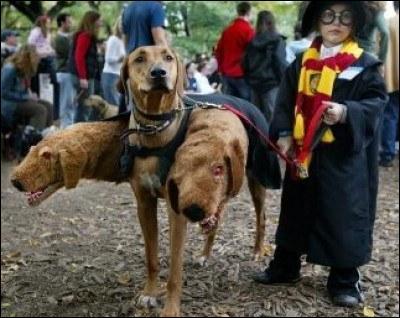 Dans un autre registre, voici une photo qui représente un chien à trois têtes. Il fait référence à Touffu, créature qui appartient à Hagrid. Mais dans quelles circonstances l'a-t-il obtenue ?