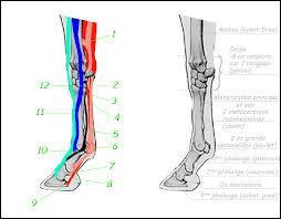 Les tendons et les ligaments sont des ……………. qui, reliants les …. entre eux permettent de les …………. et donc contribuent au mouvement.