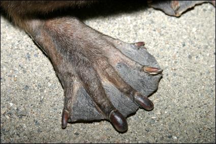 Trouver le nom de cet animal ne devrait pas être un trop gros ...  bouleau , alors ne ... rongez pas votre frein !