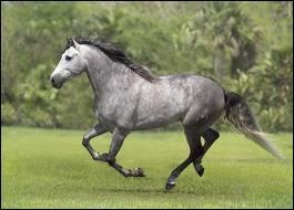 Quelle est la robe de ce cheval