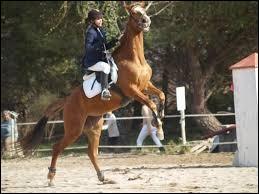 Que faut-il faire lorsqu'un cheval se cabre et que vous êtes dessus ?