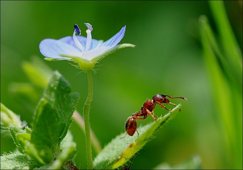 Que se passerait-il si une fourmi avait la taille d'un humain ?