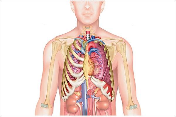 Comment s'appelle l'espace, au centre du thorax, entre les poumons ?
