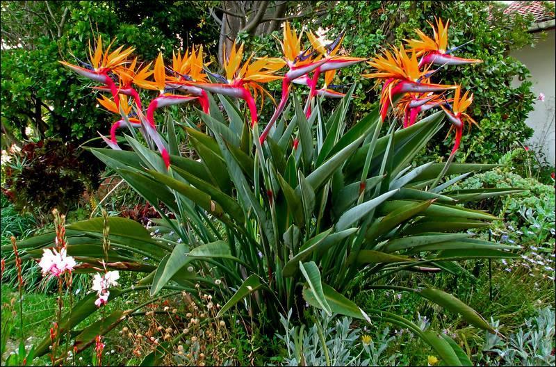 Quizz nature m diterran enne quiz plantes nature mers - Plante oiseau de paradis ...