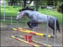 Quelle est la taille minimale d'un cheval ?