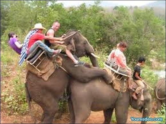 Ma femme est sans défense; heureusement pour elle, sinon on la confondrait avec un éléphant !