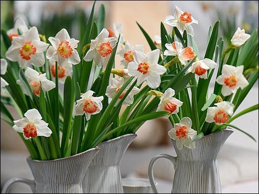 Le nom de cette fleur est le même que celui d'un héros de la mythologie grecque. C'est également le prénom d'un rappeur français, connu aussi sous le pseudo Scor16. Quel est ce prénom ?