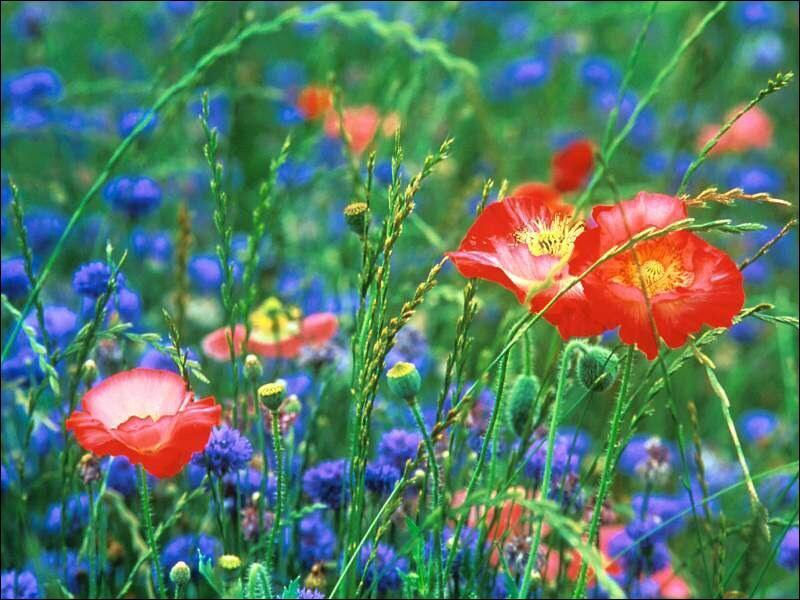 Puisqu'on parle de fleurs... dans quelle saga littéraire peut-on rencontrer Fleur Delacour ?