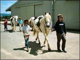 Quelles précautions faut-il prendre pour mener en main un cheval équipé d'un filet et d'une selle ?
