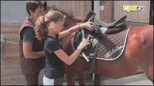 Comment desseller correctement un cheval ?