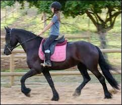 Quelle est la bonne position à cheval ?