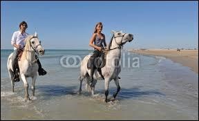Pour faire tourner un cheval qui est au pas il faut ...