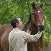 Pour aborder correctement un cheval attaché, il faut ...