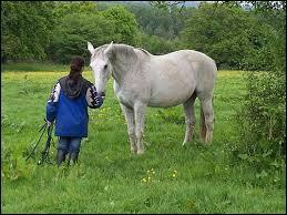 Pour attraper un cheval ou un poney au prés, il faut ...