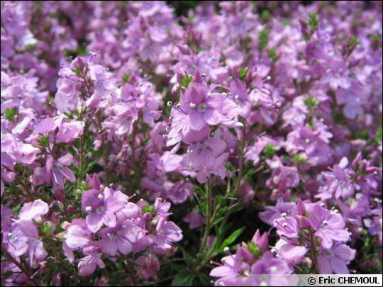 Reconnaissez-vous ces fleurs ?