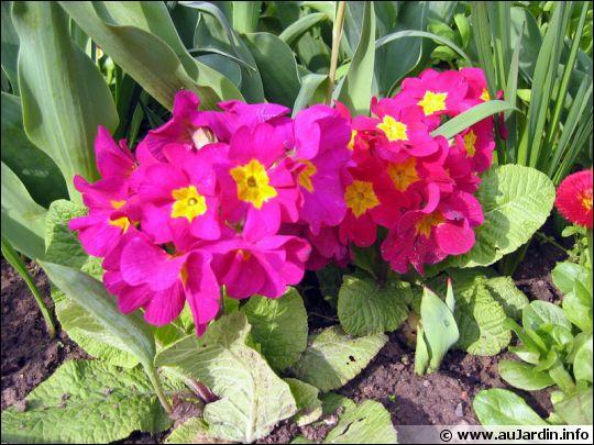 Quel est le nom de ces fleurs printannières ?
