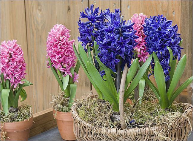 Quel nom donnerez-vous à ces fleurs ?