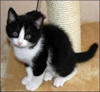 Grisette vient de mettre bas. Les deux chatons ... sont noirs, les deux autres sont noirs et blancs. Tous ces chatons ... se portent bien.