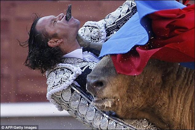 Assurément, ce taureau va vous donner des idées, mais attention, il ne faut pas toujours se fier aux apparences !