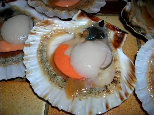 Présente dans de nombreux pays, cette marque a fait de ce mollusque son emblème !