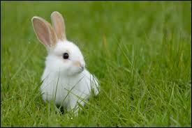 Ce lapin a vu quelque chose. Un autre :