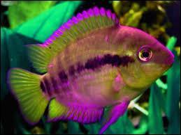 Ceci est un poisson. Et en anglais ?