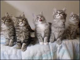 Et s'ils sont plusieurs chatons ?